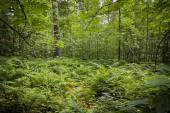 Green thick forest — Stock Photo