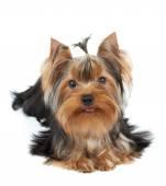 Belo cão — Foto Stock