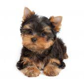 Um filhote de cachorro — Foto Stock