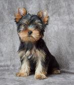 Pet on textile backdrop — Stock Photo