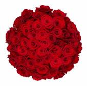 Fifty one roses — Stock Photo