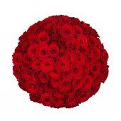 Seventy one roses — Stock Photo
