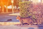 Street alley cat — Stock Photo