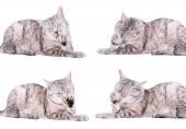 Gray tabby cat — Stock Photo