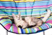 Lounger cat — Stock Photo