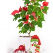 Christmas star gift box flowerpot — Stock Photo #62998269