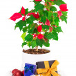 Christmas star gift box flowerpot — Stock Photo #62998797