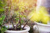 Flowers flowerbed outside pot — Stock Photo