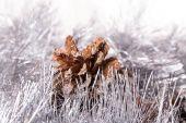 Tinsel pine cone — Foto Stock