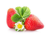Two strawberries with flower — Stock Photo