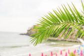 Palm frond and Sea — Stock Photo