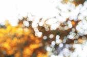 Background with bokeh trees — Stock Photo