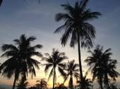 Palm trees on the background of a beautiful sunset — Stockfoto