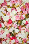 Pattern of fresh colorful roses — ストック写真