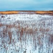 Snow Covered Field with Dry Plant — Stock Photo #65695173