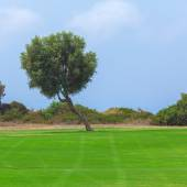 Olive Tree and Golf Field,  Paphos — Stock Photo