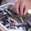 Fisherman cleaning sardines close up — Stock Photo #65158737