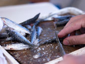 Fisherman slicing sardines — Stock Photo