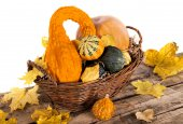 Pumpkin crop — Stock Photo