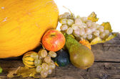 Pumpkin crop autumn — Stock Photo