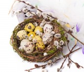 Easter eggs in the nest with narcissus — Stock Photo