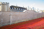 LONDON TOWER - OCTOBER 11 2014. Ceramic poppies installation by  — Stock Photo