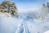 Russian winter forest in snow — Stock Photo