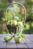 Fresh apple crop outdoors — Stock Photo