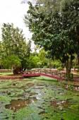 Taman Rekreasi Tasik Melati, Perlis, Malaysia — 图库照片