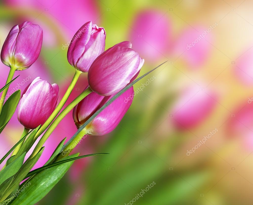 Photo Collection Prachtige Kleurrijke Lente Achtergrond