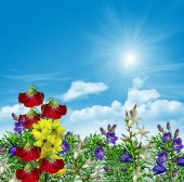 Flowers on a background of blue sky — Stock Photo
