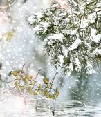 Winter Forest. — Foto Stock