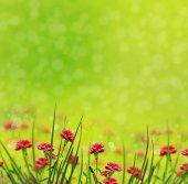Flores cravos — Foto Stock