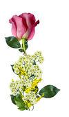 красные розы на белом фоне — Стоковое фото