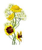 Dahlia flowers isolated on white background — Stock Photo