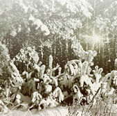 Inverno na floresta — Foto Stock