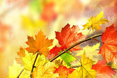 Autumn foliage. Golden Autumn. — Stockfoto