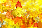 Autumn foliage. — Stock Photo
