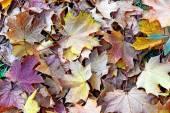 Astratto sfondo d'autunno foglie d'acero — Foto Stock