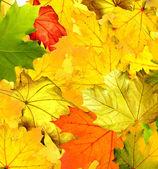 Fogliame di autunno. — Foto Stock