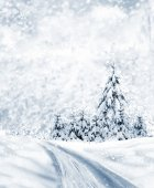 зимний лес. — Стоковое фото