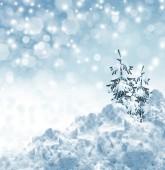 冬の風景やクリスマス ツリー — ストック写真