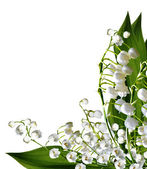 The branch of lilies of the valley flowers isolated on white bac — Zdjęcie stockowe