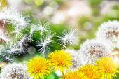 Paisagem de verão com flores flores — Fotografia Stock