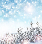 Winter background. winter forest — Foto Stock