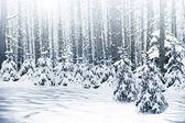Winter. Snowfall. — 图库照片