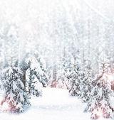 Zima. sněžení. — Stock fotografie