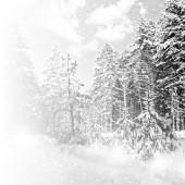 冬季森林和蓝色的天空 — 图库照片