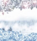 Zimní les. — Stock fotografie