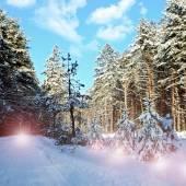 Zimní les a modrá obloha — Stock fotografie